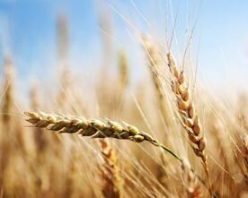 合力推进农药使用量零增长行动