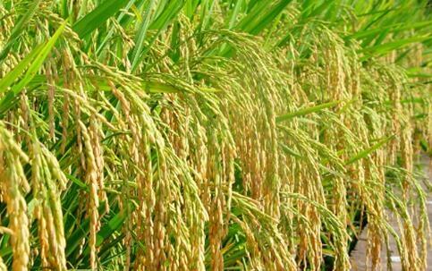 农药经营许可管理办法