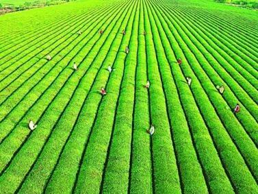 农药必须科学安全使用