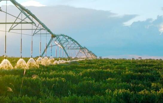 农药肥料搭配关键技巧